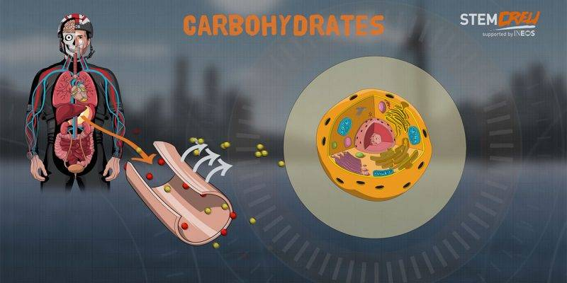 Fitness and Nutrition Lesson - Carbohyrate